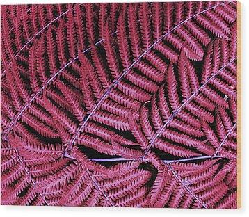 Red Fern Wood Print