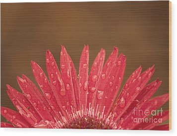 Red Flower 1 Of 2 Wood Print
