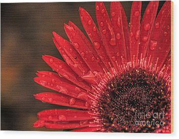 Red Flower 2 Of 2 Wood Print