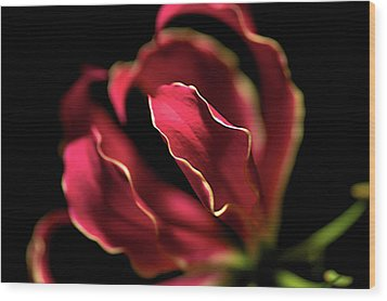 Red Flower 3 Wood Print by Sheryl Thomas