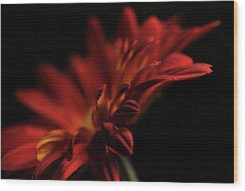 Red Flower 5 Wood Print by Sheryl Thomas