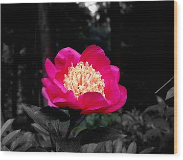 Red Flower Wood Print by Aron Chervin