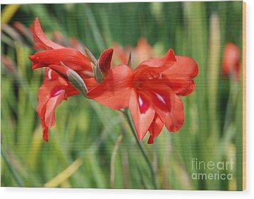 Red Flower Wood Print by Jan Daniels