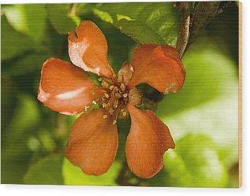 Red Flower Wood Print by Jouko Mikkola