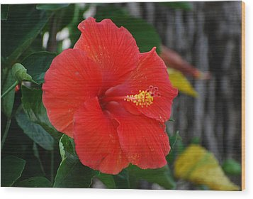 Wood Print featuring the photograph Red Flower by Rob Hans