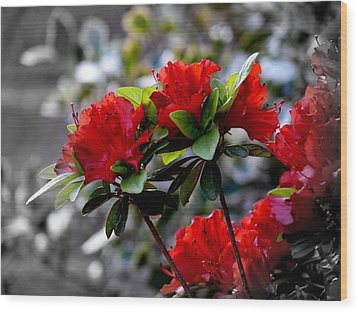 Red Flowers Wood Print by Aron Chervin