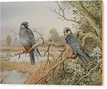 Red-footed Falcons Wood Print by Carl Donner
