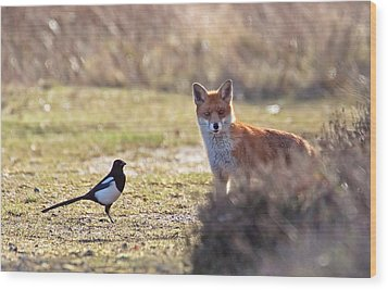 Red Fox And Magpie Wood Print