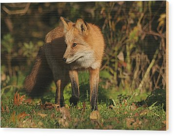 Wood Print featuring the photograph Red Fox by Doris Potter