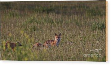 Red Fox Family Wood Print