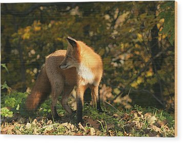 Wood Print featuring the photograph Red Fox In Shadows by Doris Potter