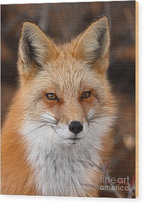 Red Fox In Winter Ruff Wood Print by Max Allen