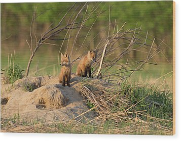 Red Fox Kits Keeping Watch Wood Print