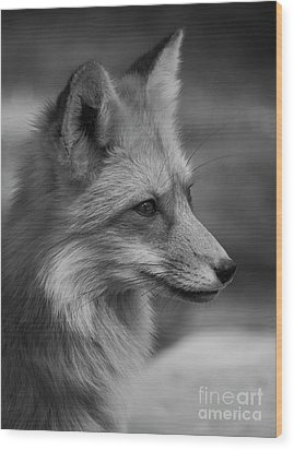Red Fox Portrait In Black And White Wood Print