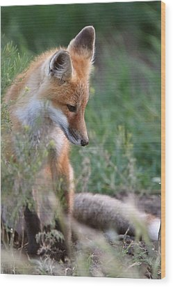 Red Fox Pup Outside Its Den Wood Print by Mark Duffy