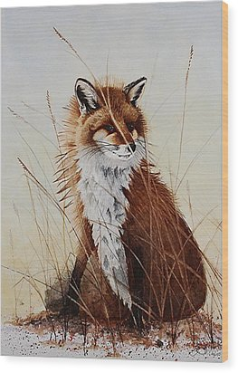 Red Fox Waiting On Breakfast Wood Print
