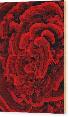 Red Fungi Wood Print by Dana  Oliver