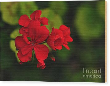 Red Geranium Wood Print by Kaye Menner