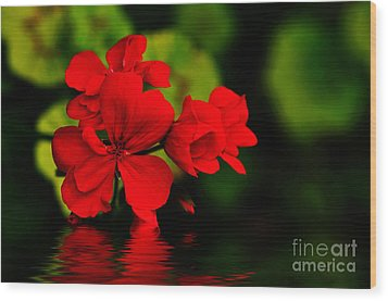 Red Geranium On Water Wood Print