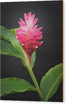 Red Ginger Wood Print