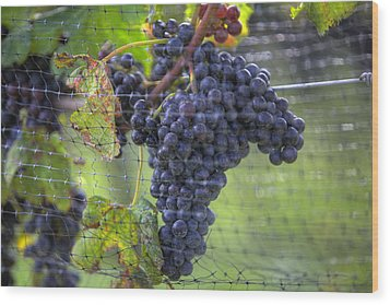 Red Grapes  Wood Print by Steve Gravano