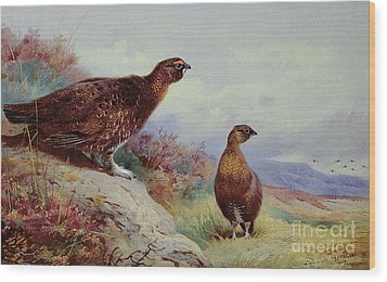 Red Grouse On The Moor, 1917 Wood Print by Archibald Thorburn