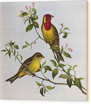 Red Headed Bunting Wood Print