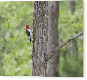 Red-headed Woodpecker 2017-1 Wood Print by Thomas Young