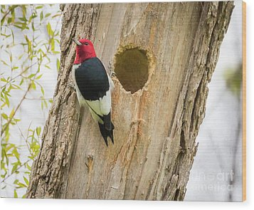 Wood Print featuring the photograph Red-headed Woodpecker At Home by Ricky L Jones