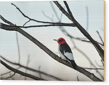Red-headed Woodpecker Wood Print