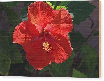Red Hibiscus Wood Print by Susanne Van Hulst