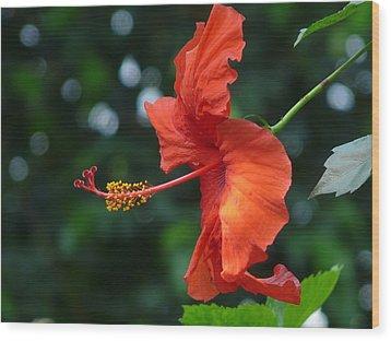 Red Hibiscus Wood Print by Valerie Ornstein