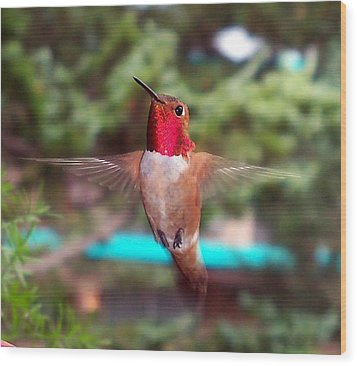 Red Hummingbird Wood Print
