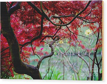 Wood Print featuring the photograph Red Japanese Maple by Nancy Bradley