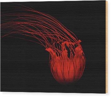 Red Jellyfish Wood Print by Denise Keegan Frawley