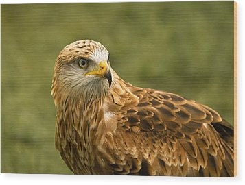 Wood Print featuring the photograph Red Kite by Scott Carruthers