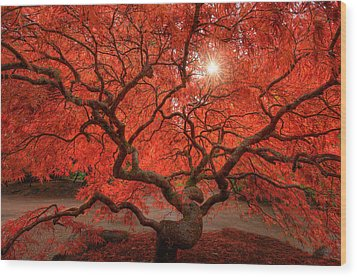 Red Lace Wood Print by Dan Mihai
