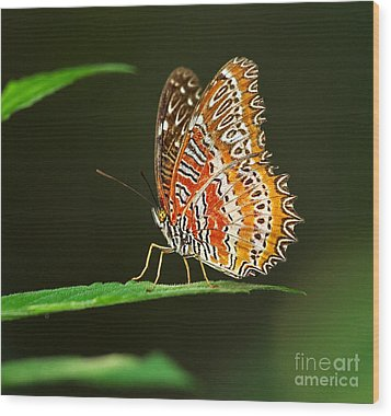 Red Lacewing Butterfly Wood Print by Louise Heusinkveld