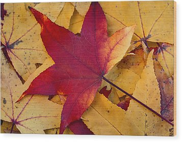 Red Leaf Wood Print by Chevy Fleet