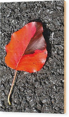 Red Leaf On Asphalt Wood Print by Douglas Barnett