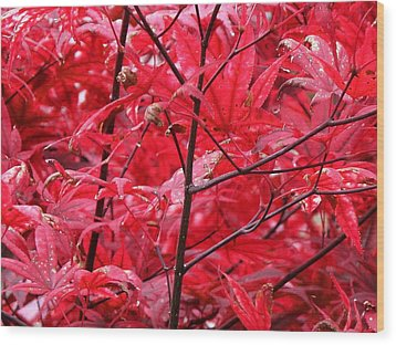 Red Leaves And Stems 2 Pd Wood Print by Lyle Crump