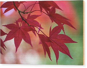 Wood Print featuring the photograph Red Leaves by Clare Bambers