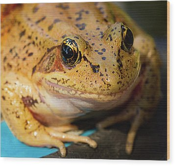 Wood Print featuring the photograph Red Leg Frog by Jean Noren
