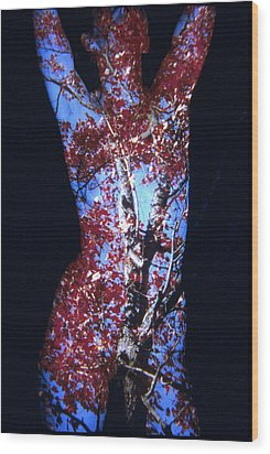 Red Maple Wood Print by Arla Patch