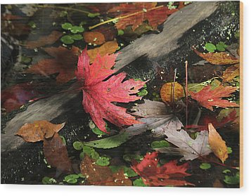 Wood Print featuring the photograph Red Maple Leaf In Pond by Doris Potter