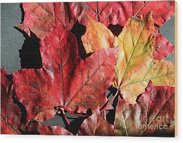 Wood Print featuring the photograph Red Maple Leaves Digital Painting by Barbara Griffin