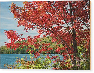 Wood Print featuring the photograph Red Maple On Lake Shore by Elena Elisseeva