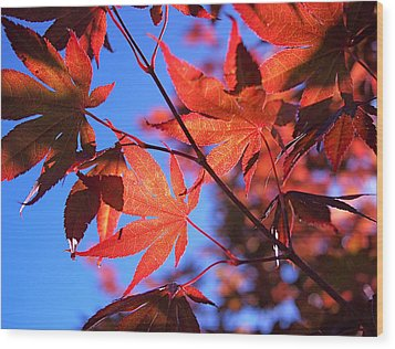 Red Maple Wood Print by Rona Black