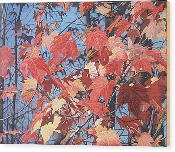 Red Maples Wood Print by - Harlan