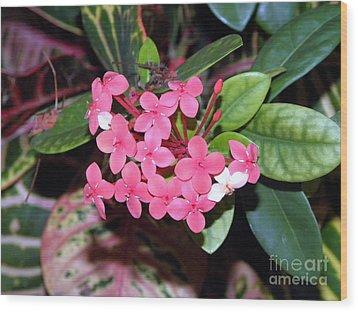 Red Maui Ixora Wood Print by Terri Mills